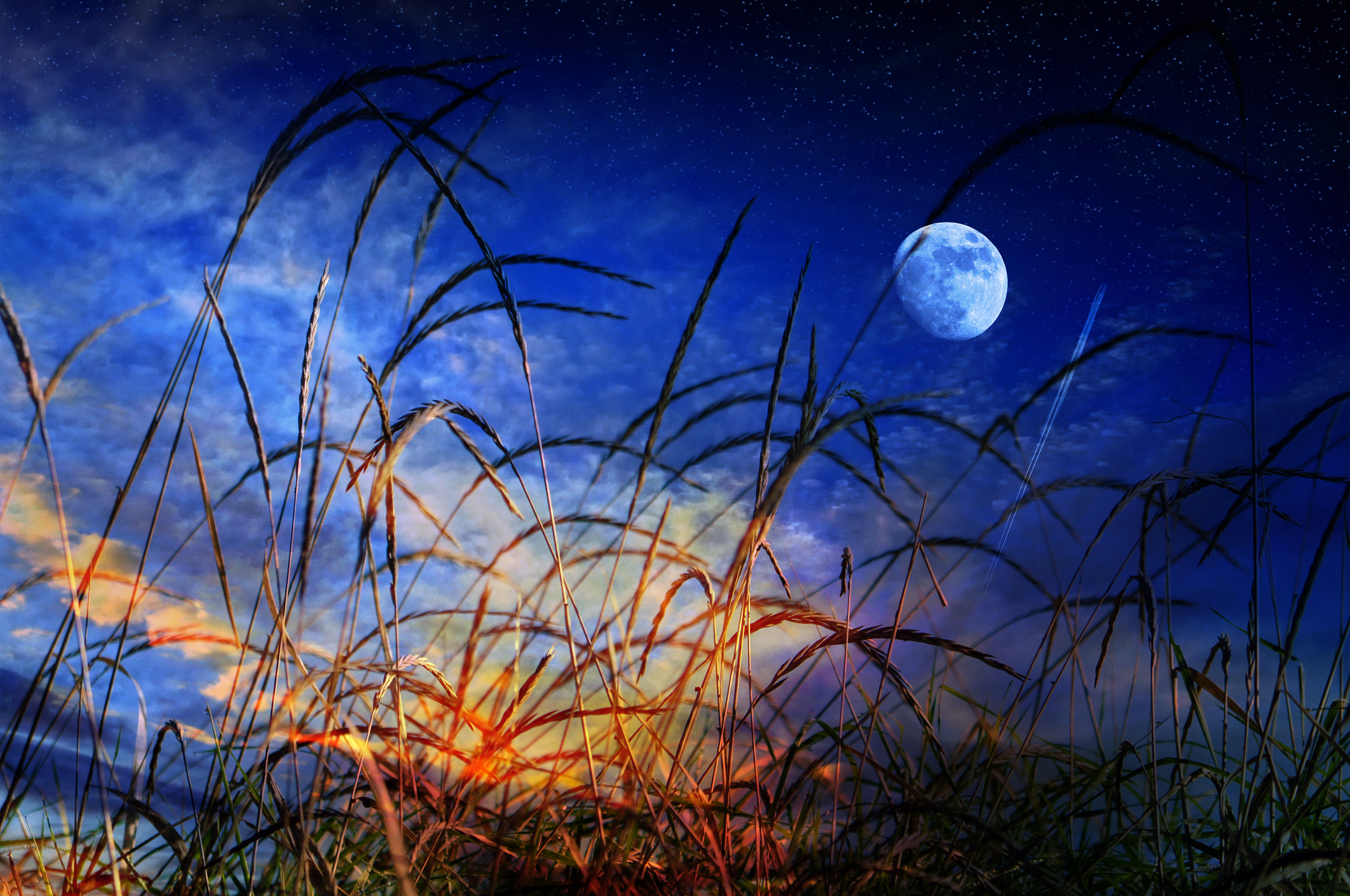 Grass blades in the foreground and blue moon night in the background